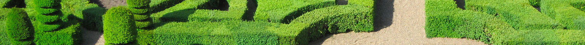 French garden hedge trimmed yew maze