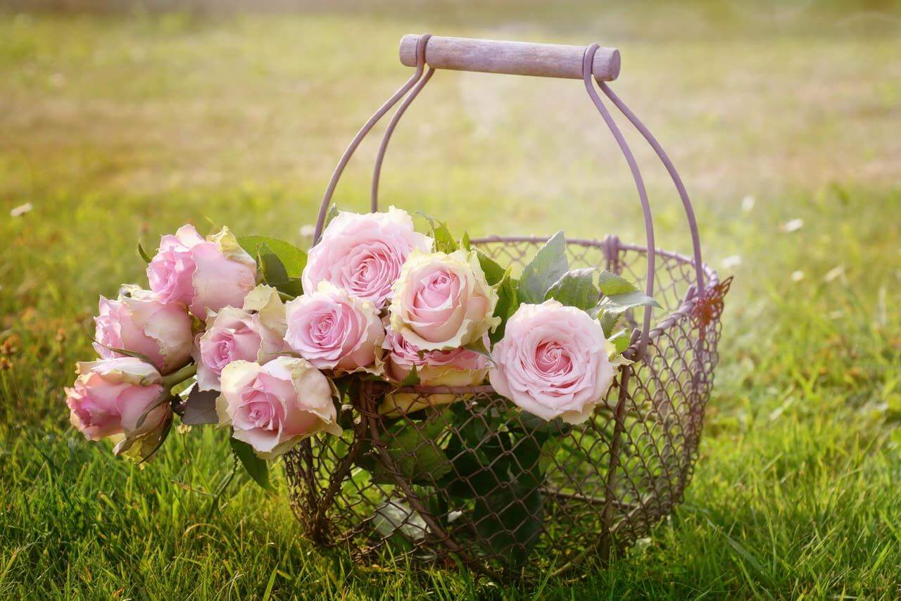 antique metal basket with a bunch of pale pink roses inside