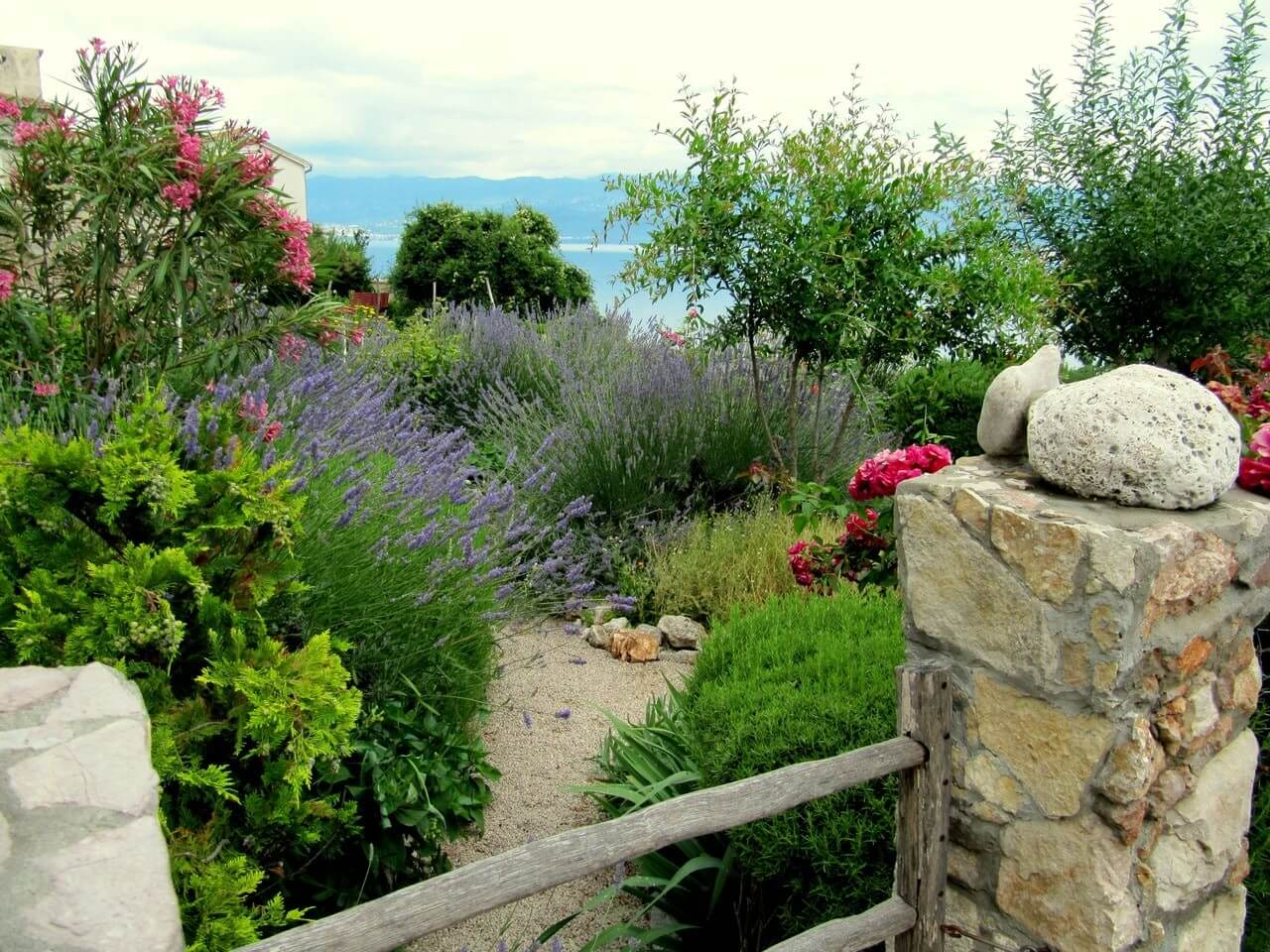 view of the Mediterranean Sea with in the foreground a garden planted with oleanders, lavender and thujas.