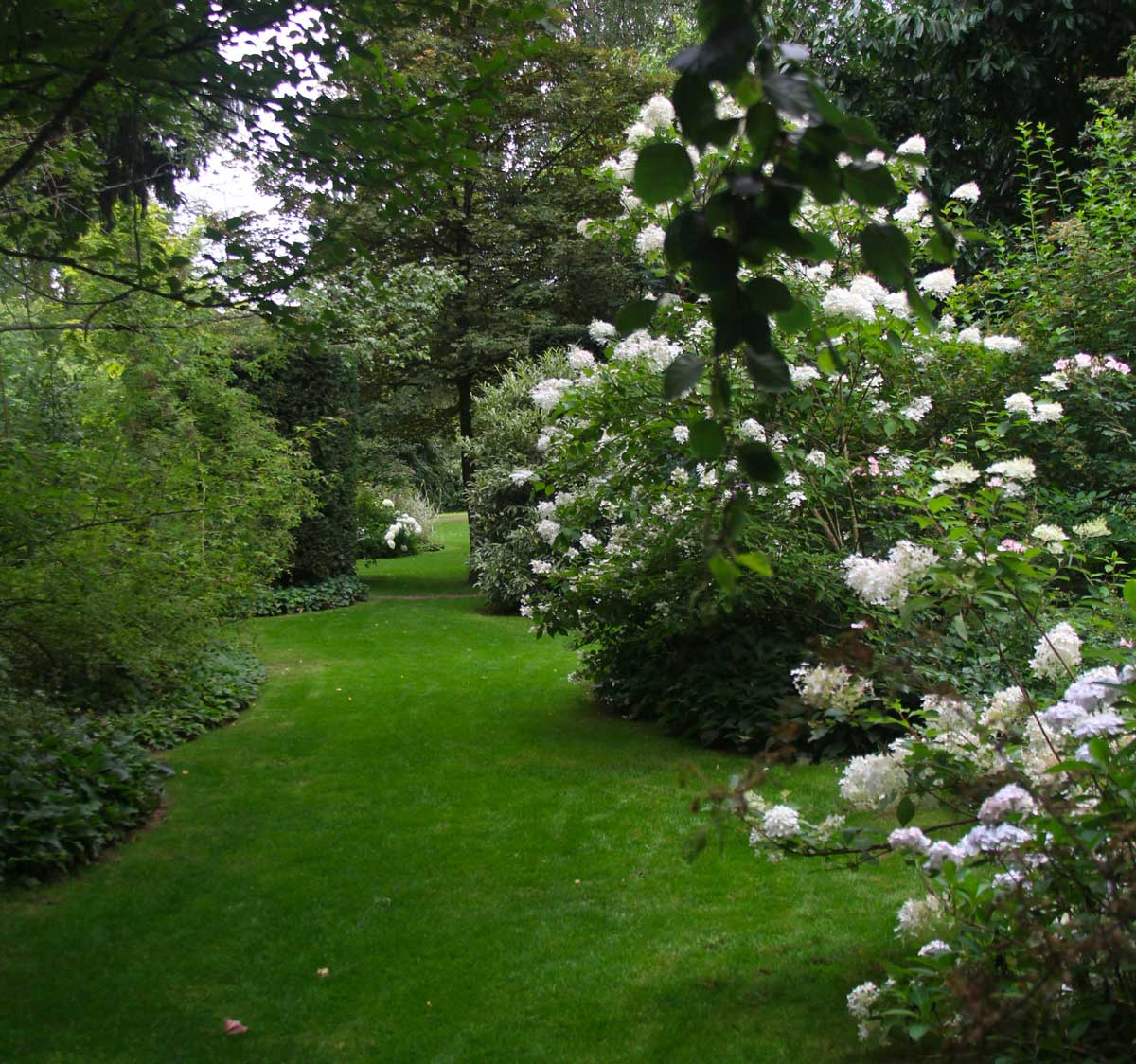 alley of an English garden with a supple and elegant layout