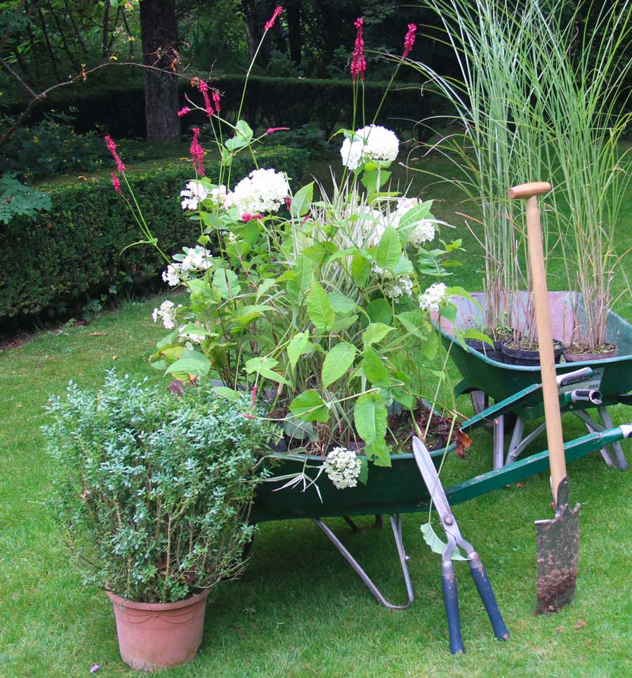 wheelbarrow, plants and tools, the perfect kit to get you off to a good start.