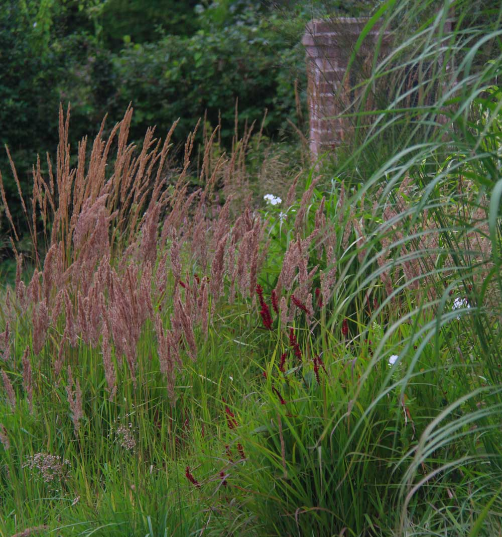 close-up on the grasses of the free nature garden