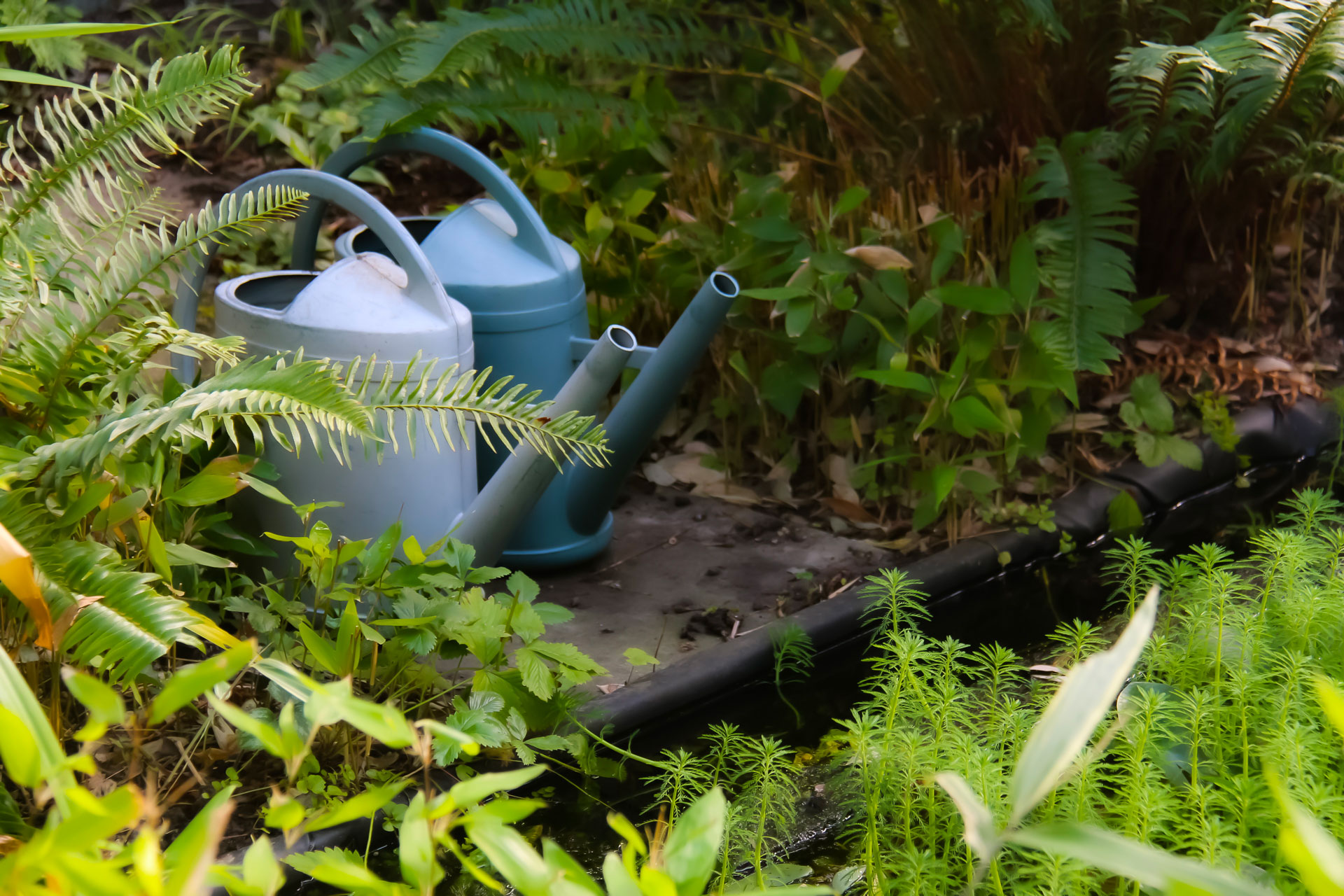 photo of two watering cans on the ground in the middle of plants