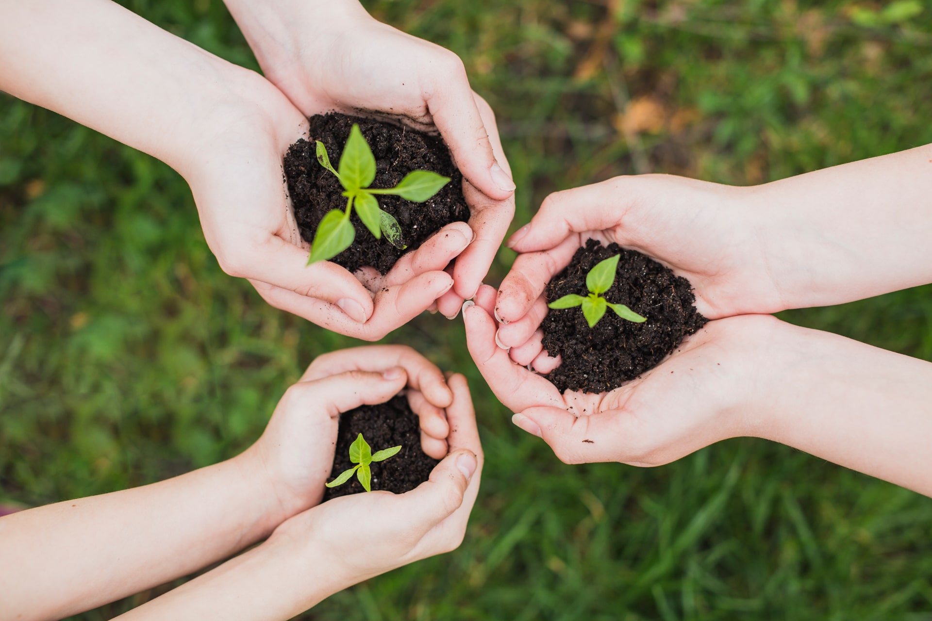 photo showing three pairs of hands each with a plant on it
