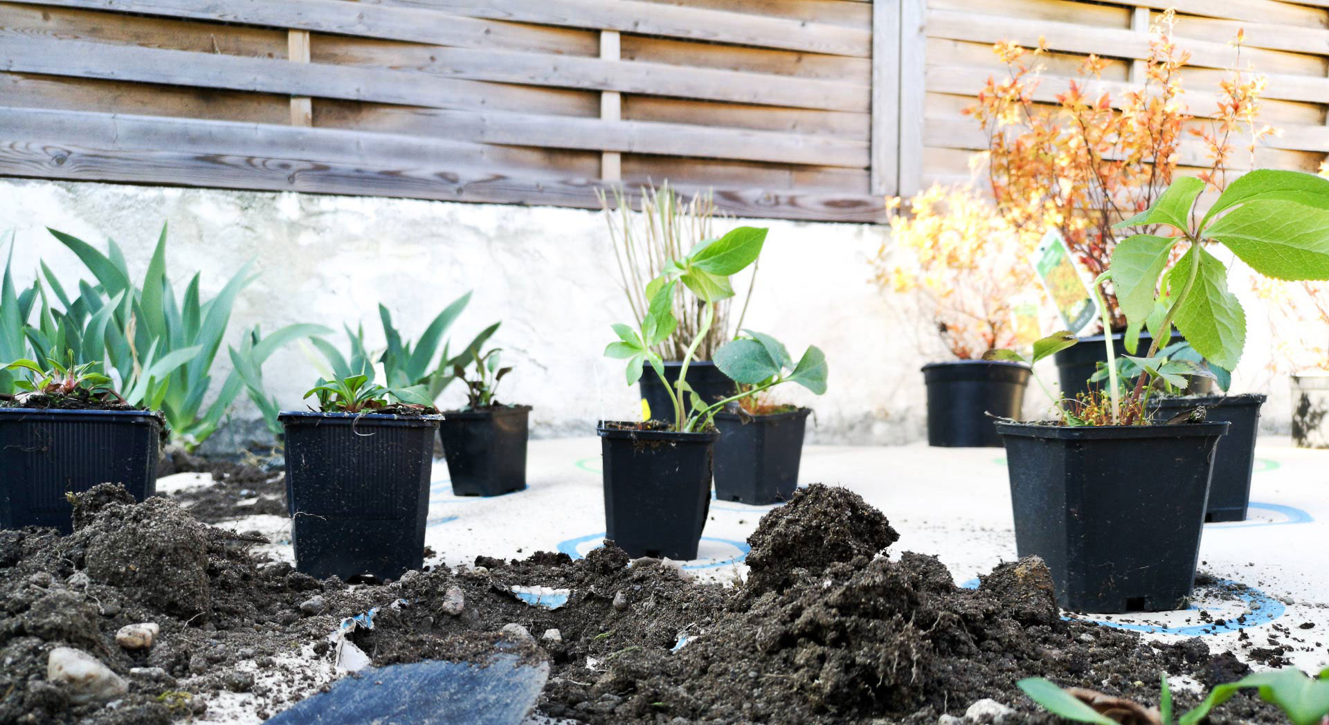 photo of plants in pots placed on the biodegradable cardboard provided by draw me a garden