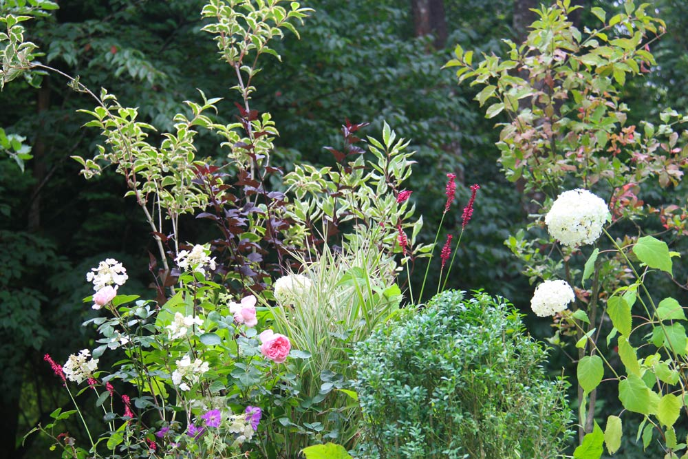 zoom on a garden with an assortment of various plants mixing notes of pink, green and white