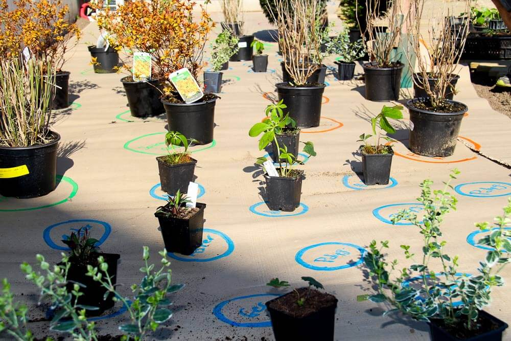 overview of potted plants positioned on the biodegradable cardboard during a draw me a garden installation